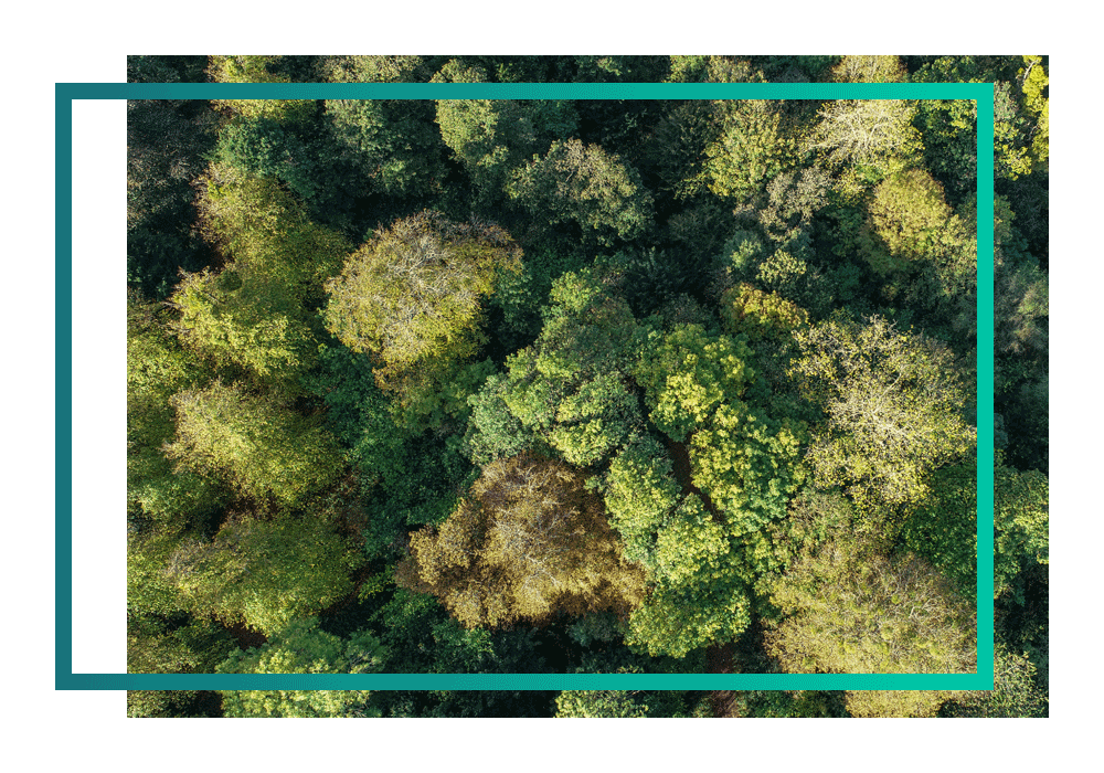 Overhead shot of forest