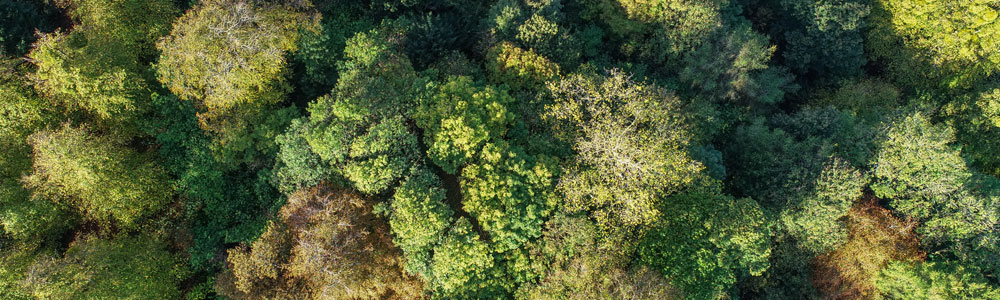 An aerial view of a forest to represent UKCloud's carbon negative solutions